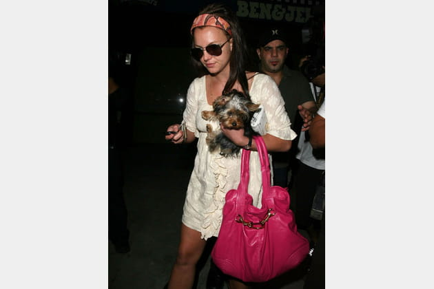 Britney Spears et son yorkshire