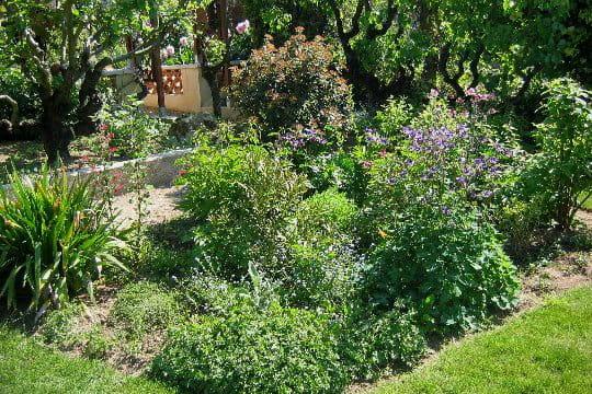 un massif de vivaces et d 39 arbustes. Black Bedroom Furniture Sets. Home Design Ideas