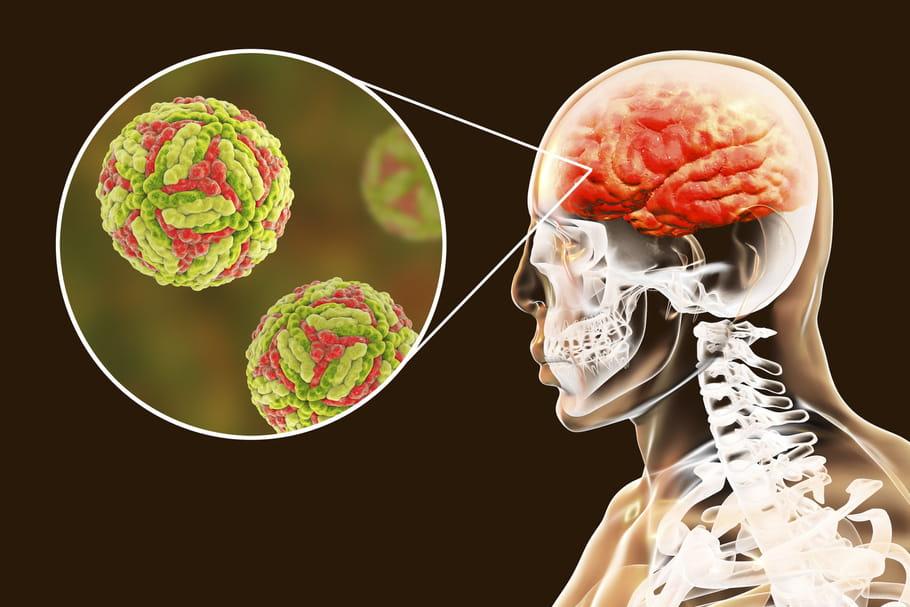 Encéphalite japonaise: symptômes, pays à risque, vaccin