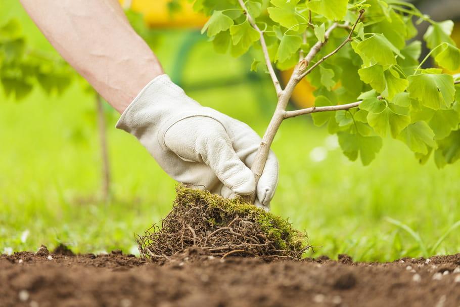 Arbres - fiches pratiques pour planter un arbre