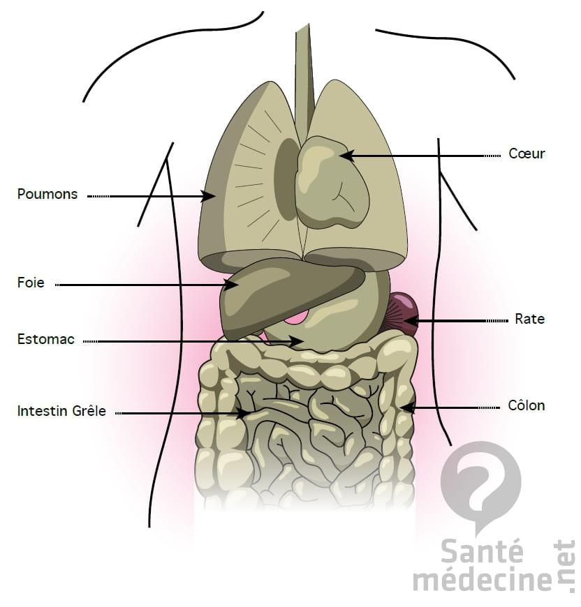 Foie - Schéma, anatomie et définition - Santé-Médecine