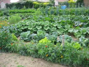 profitez des derniers légumes de l'été de votre potager