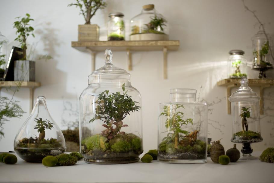 Concours Green Factory : un microcosme végétal Treeki à gagner