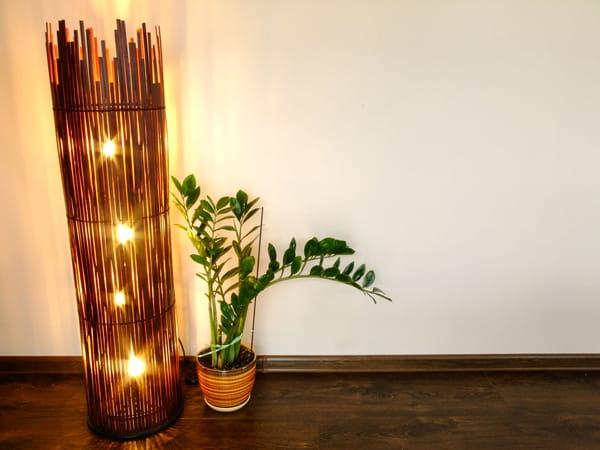 zamioculcas-plante-pot-sol