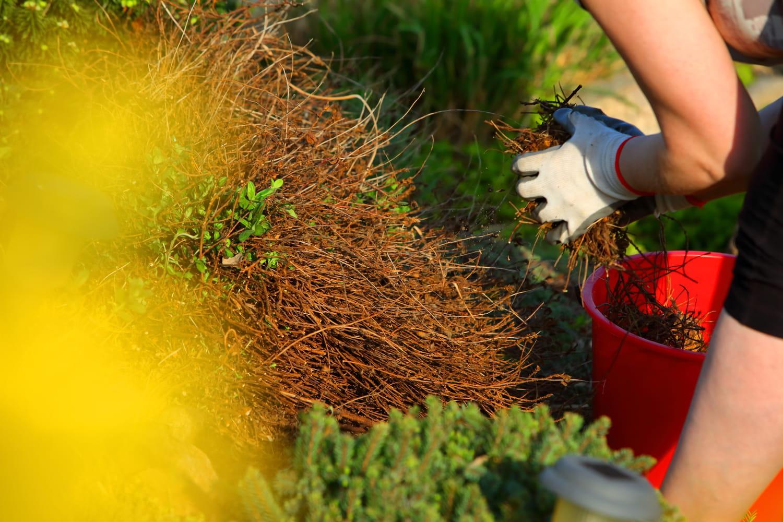 Ces jours du calendrier lunaire pendant lesquels il ne faut pas jardiner