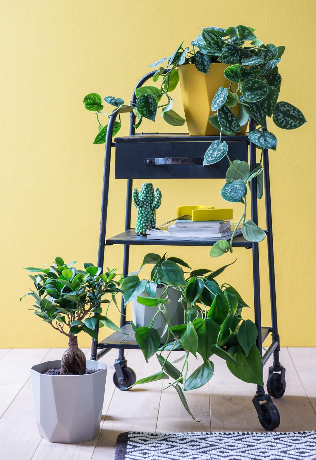 Quelle Plante Mettre Dans Un Grand Pot Exterieur ces plantes d'intérieur qui sont tendance
