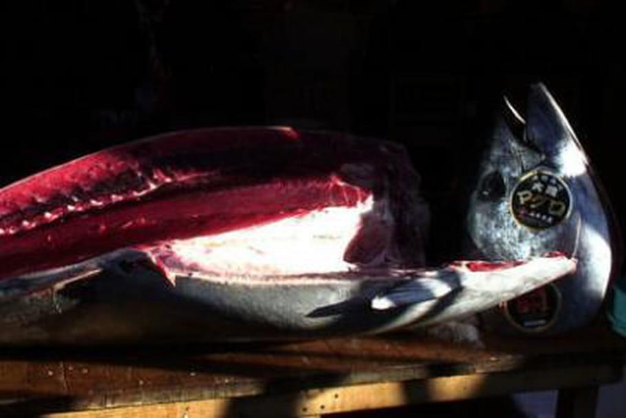 Record : un thon rouge  vendu 1,38 million d'euros au Japon