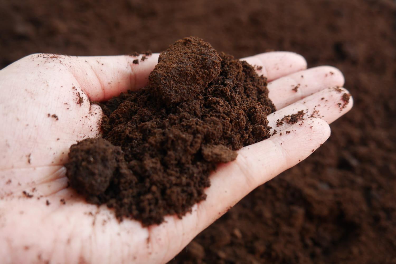 Marc de café: quelle utilisation dans la maison et au jardin?