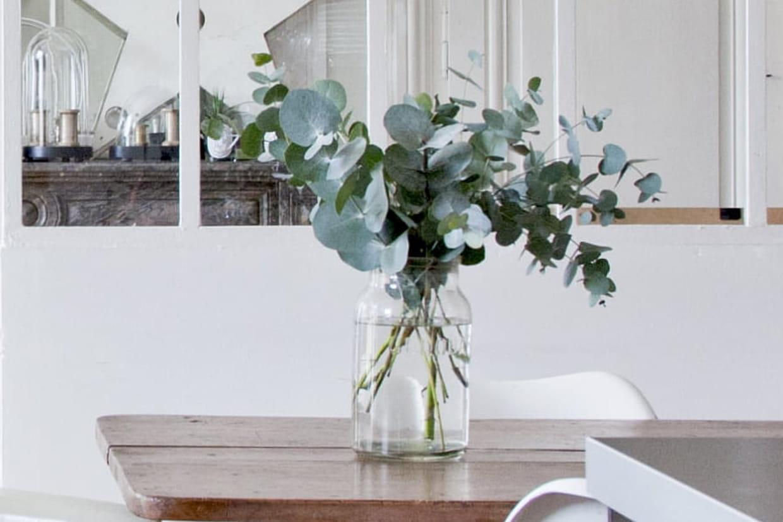 Feuille D Eucalyptus Bouquet zoom sur l'eucalyptus gunnii, le végétal à adopter