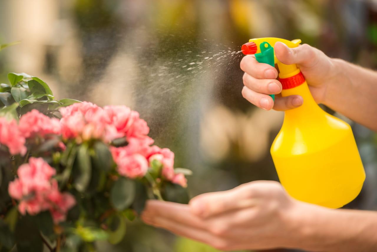 comment fabriquer des insecticides naturels ?