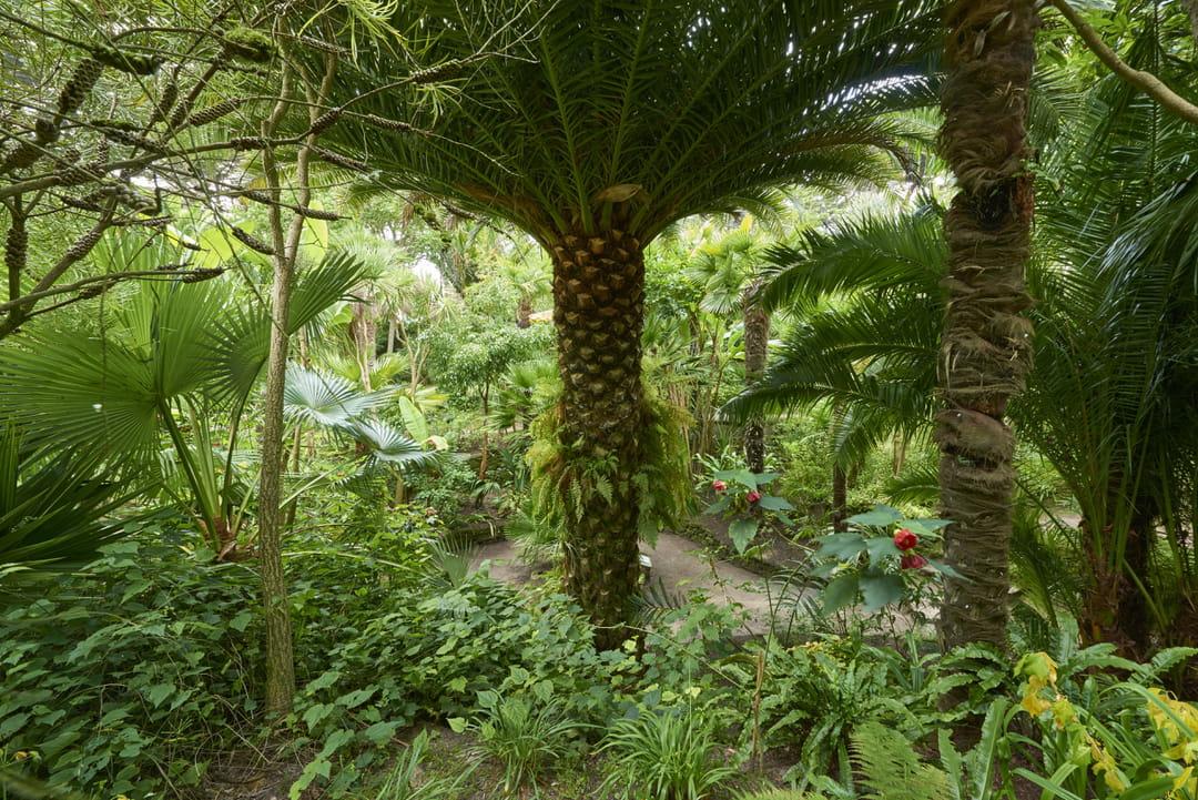 jardin-exotique-georges-delaselle-ile-de-batz
