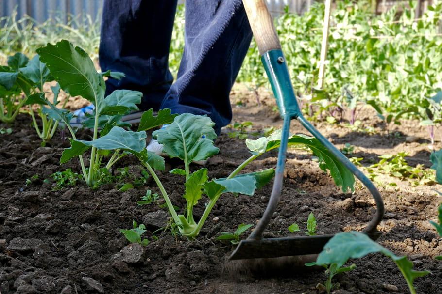 Sarcler: tout sur le sarclage au jardin