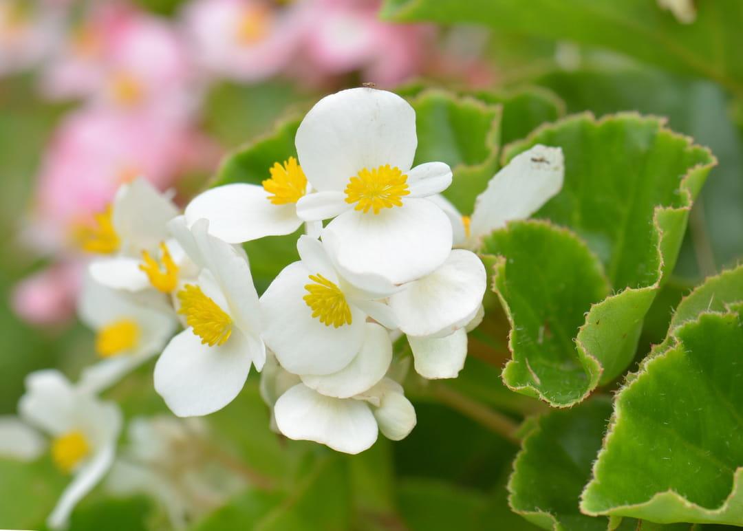 Graines De Fleurs Qui Poussent Très Vite 10 fleurs faciles à faire pousser
