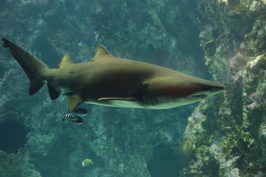 OcéanopolisBrest: un centre culturel dédié aux animaux marins