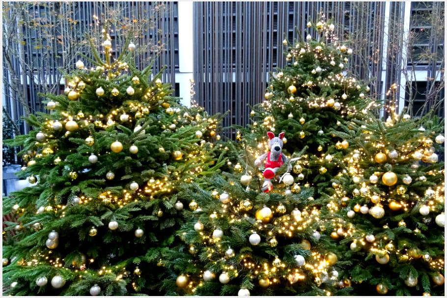 Les sapins de Noël du Cinq Codet