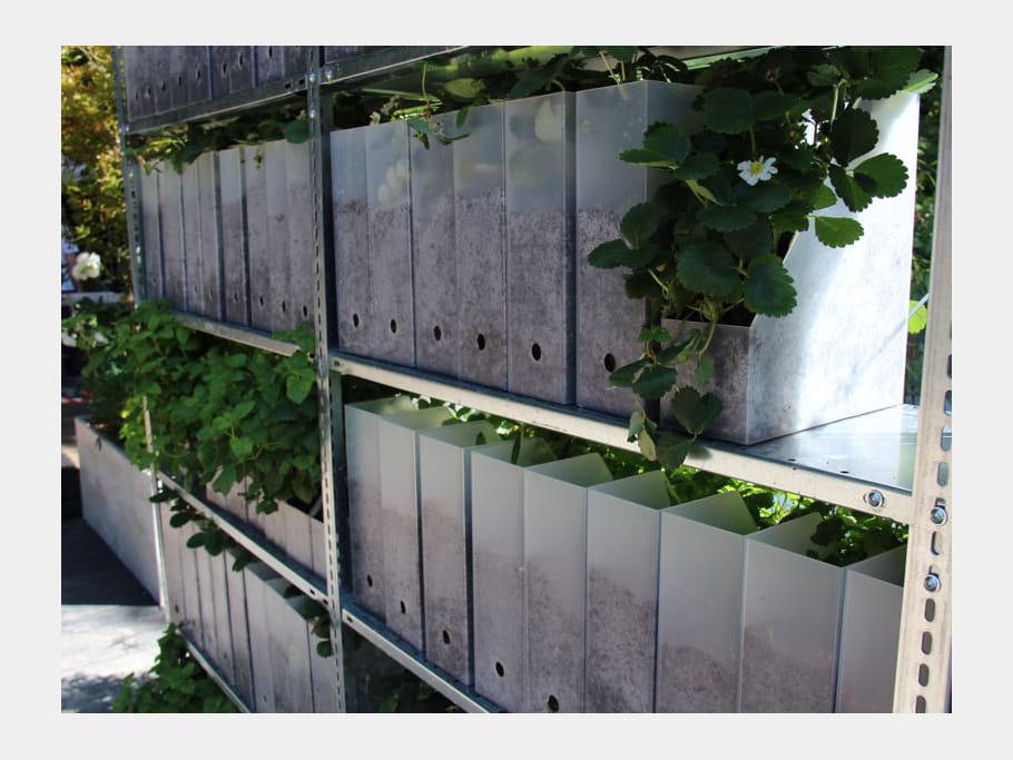 Boîtes d'archivage pour fraises