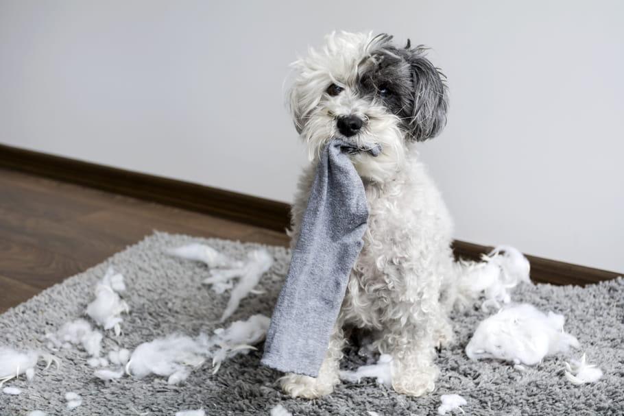 Laisser son chien seul à la maison: les bons réflexes