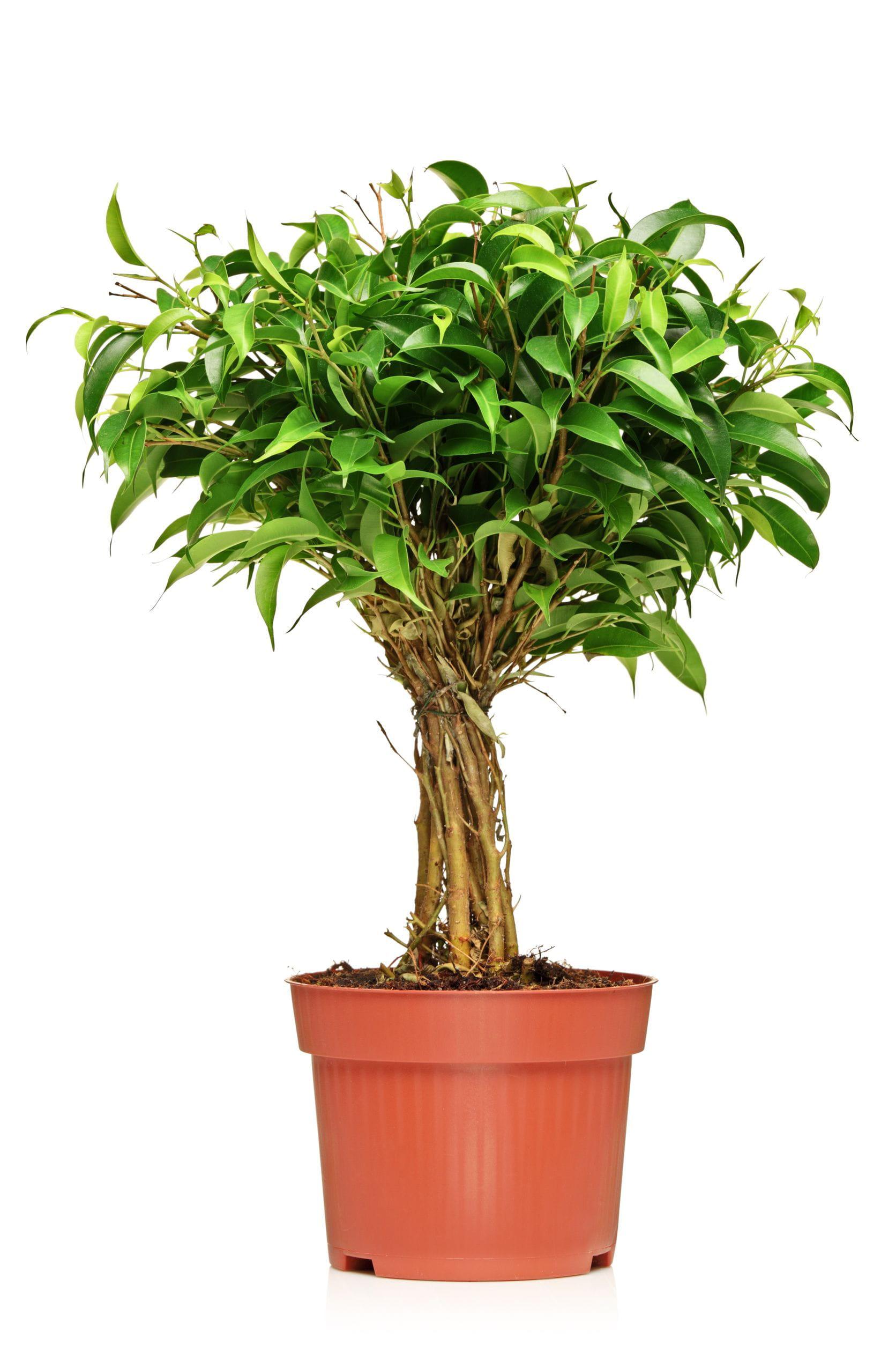 Plante D Intérieur A Faire Pousser 8 plantes d'intérieur à faire pousser chez soi
