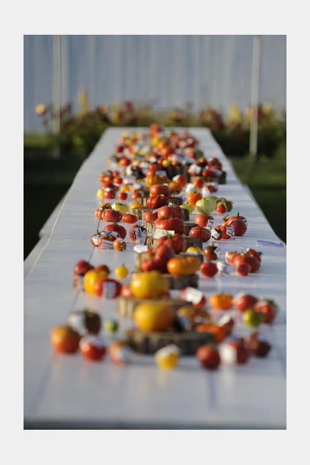 Le Festival de la tomate et des saveurs convie Ratatouille !