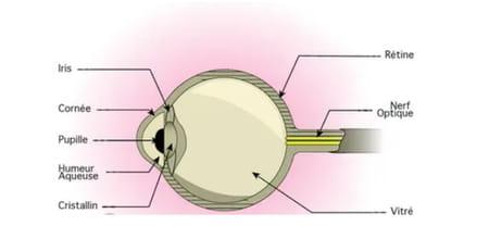 Schéma cornée kératite