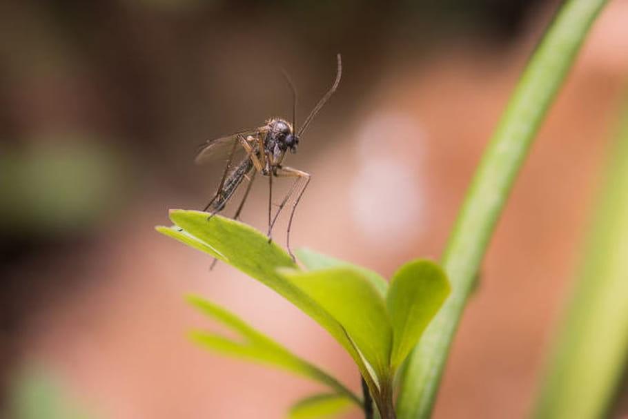 Zika : la transmission sexuelle est confirmée