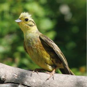 quand les chaleurs de l'été ont fait taire les oiseaux les plus téméraires des