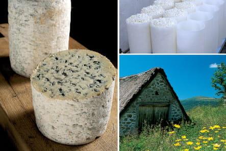 La Fourme d'Ambert, le plus doux des fromages bleus