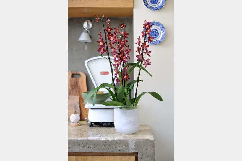 F te des m res et si on offrait une orchid e qui change for Cherche jardin a entretenir