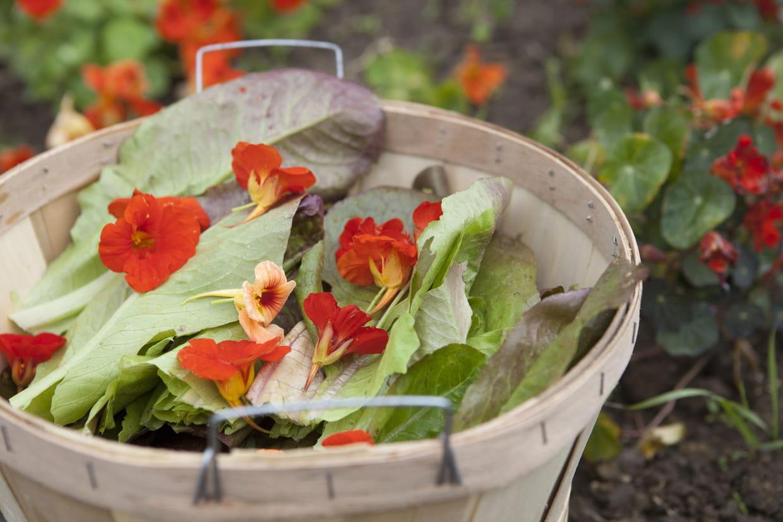 Que Faire Des Fleurs De Rhubarbe cultiver des fleurs comestibles