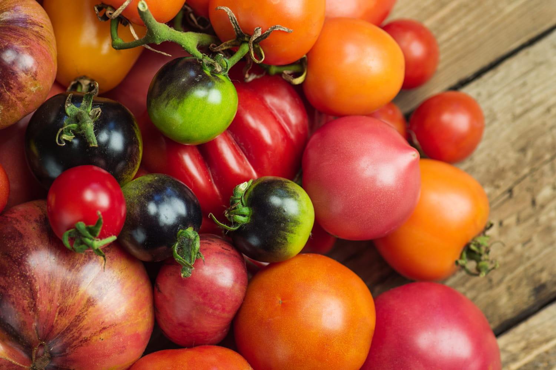 Quelles variétés de tomates pour quelle utilisation?