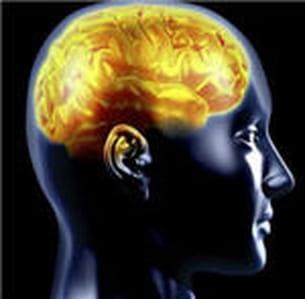 les mythes et les mystères du cerveau