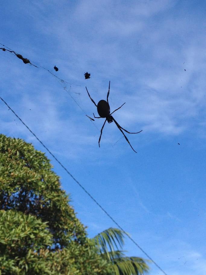 Pas d'araignée au plafond
