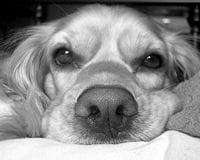 chien ennui