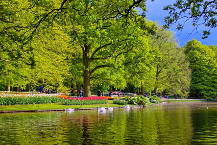 Admirer Holland Park