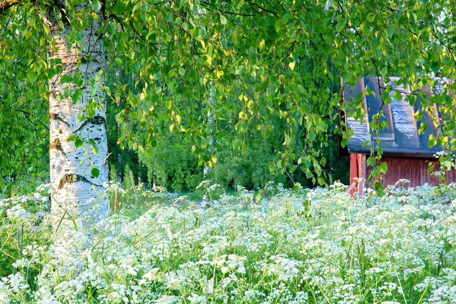 10 arbres rustiques planter. Black Bedroom Furniture Sets. Home Design Ideas
