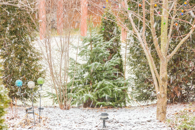 Que faire au jardin en janvier?