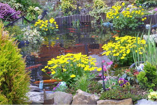 Un bassin très fleuri