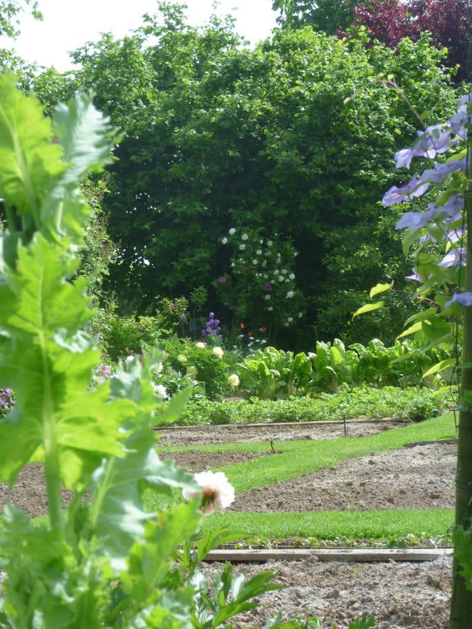 Quelques lignes dessin es le jardin pour tous les sens for Tous pour le jardin