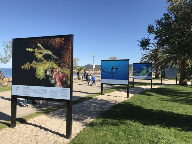 """Exposition """"Enfants de la Mer"""" le long de la plage d'Argelès"""