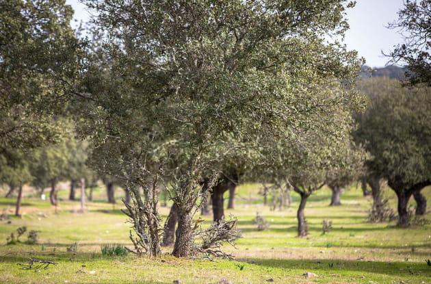 Les chênaies, l'or vert espagnol