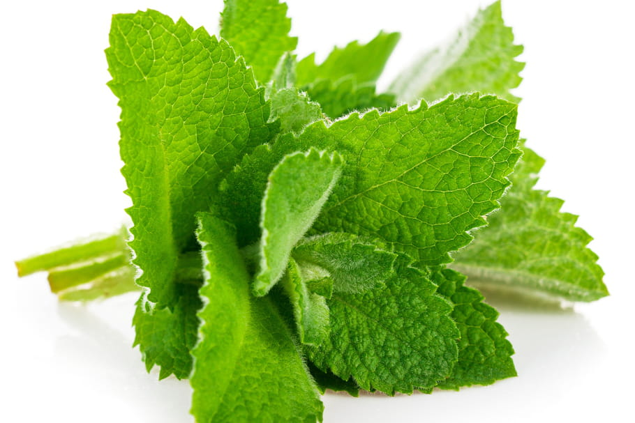 Comment conserver de la menthe fraîche ?