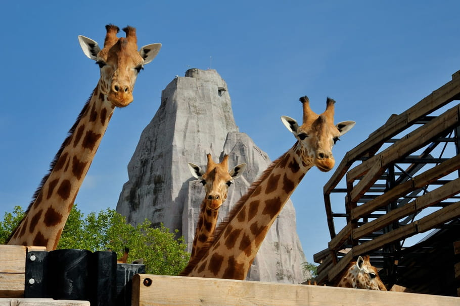 Parc Zoologique de Paris: des rendez-vous sauvages à ne pas manquer