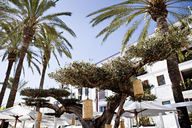 Photophores en osier et olivier