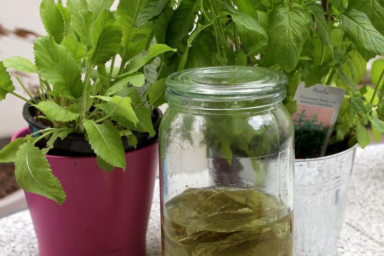 Liqueur de menthe style Chartreuse