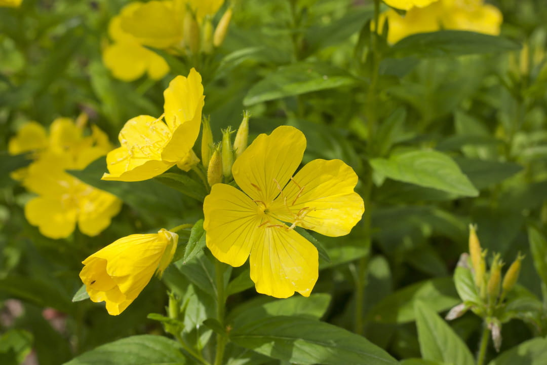 10 fleurs qui poussent presque sans eau - Fleurs qui poussent a l ombre ...
