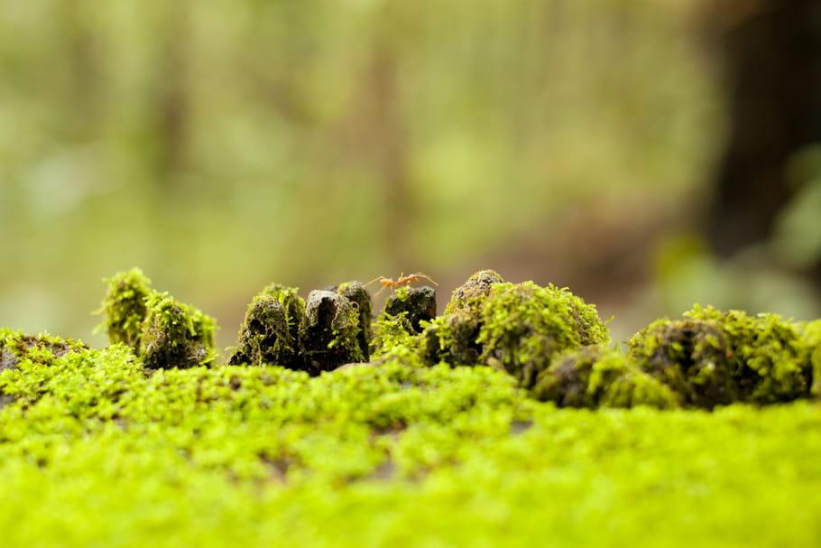 Enlever la mousse du gazon: les astuces qui marchent