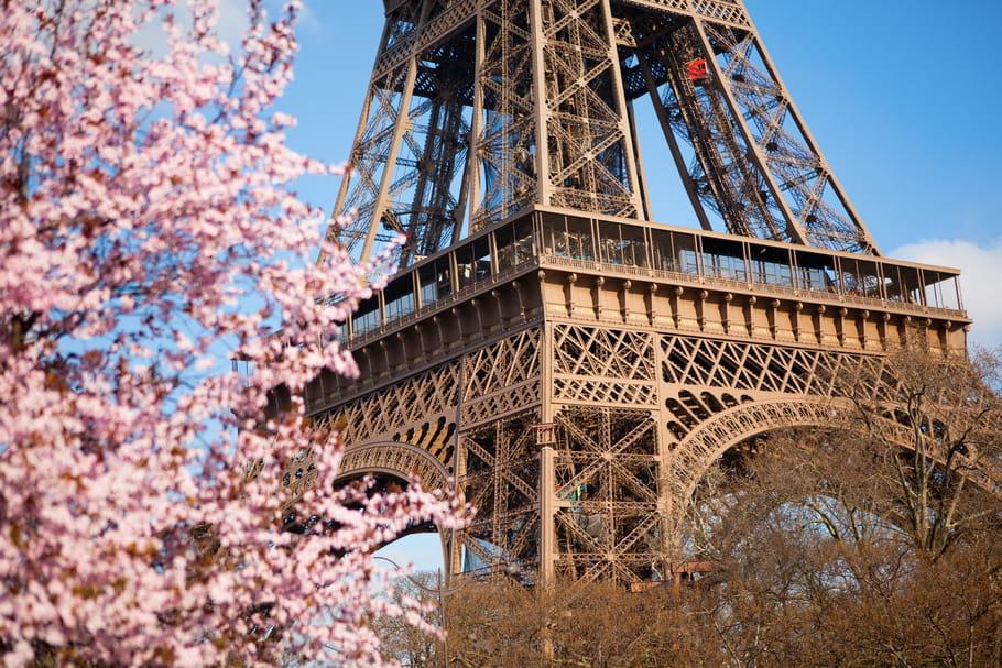 Les cerisiers fleurissent au Peninsula Paris