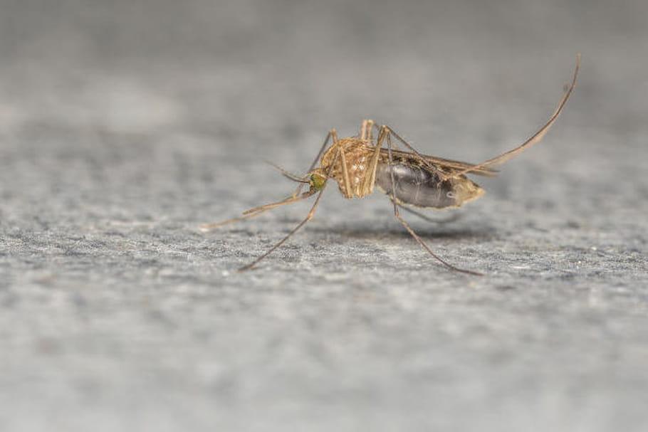 Zika : que sait-on de la transmission sexuelle ?