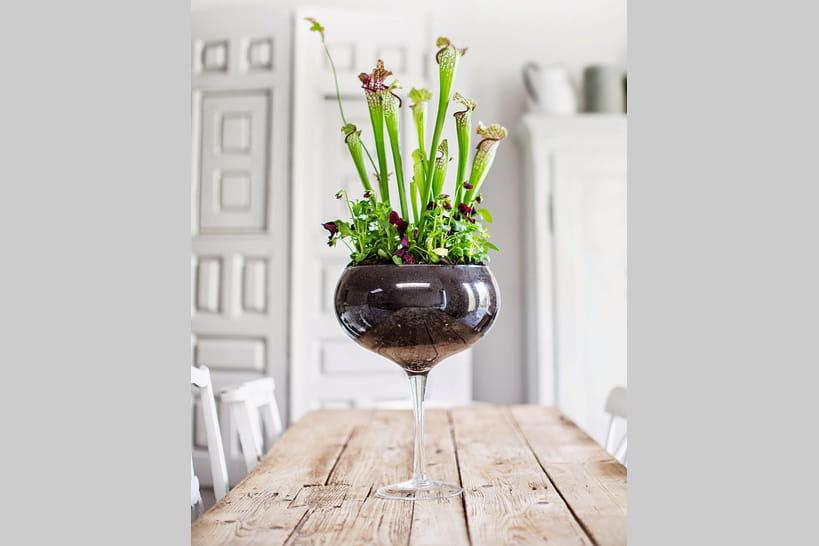 plantes carnivores des gourmandes aux pi ges subtils. Black Bedroom Furniture Sets. Home Design Ideas