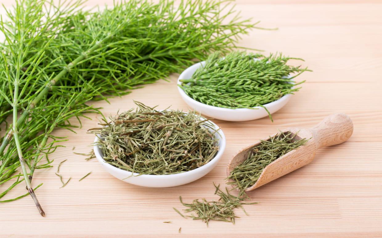Prêle : bienfaits de la plante pour la santé